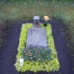 Euonymus Einfassung mit Steinplatte Münchner Friedhöfe