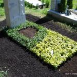 Sonder Grabanlage zweifarbig mit Euonymus Fortunei