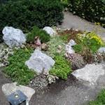 Grabgestaltung Alpinum mit Felsen Anpflanzung