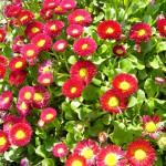 Saisonbepflanzung Frühling München